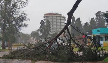 Imagen de Alerta por otra caída de lluvia histórica y fuertes vientos: jueves sin clases en La Costa, Dolores, Pinamar, Madariaga, Gesell y Mar del Plata