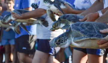 Imagen de Fundación Mundo Marino: en lo que va del año se encontraron 192 animales las playas desde San Clemente hasta Villa Gesell