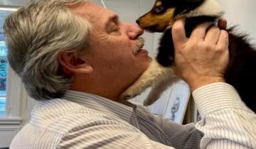 Imagen de Dylan, el perro de Alberto Fernández, presentó a Kaila, su nueva hija