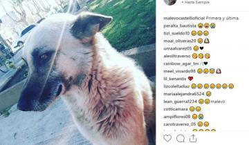 Imagen de Murió Malevo, el perro de Castelli que tenía Instagram