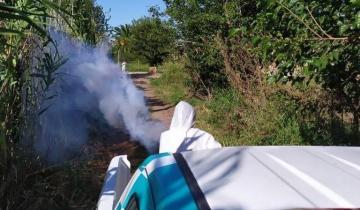 Imagen de Dengue: ya son trece los casos confirmados en La Plata