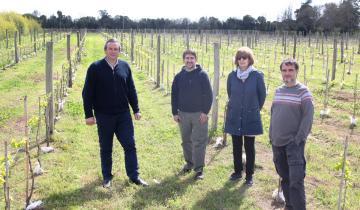 Imagen de Dolores: avanza el emprendimiento vitivinícola