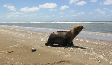 Imagen de De una carretilla en Quilmes al mar: el regreso de un León Marino a su hogar