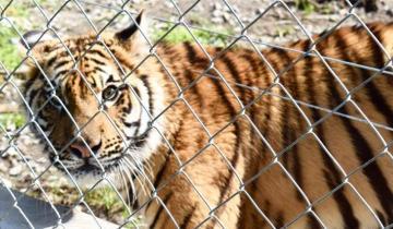 Imagen de Desbarataron un zoológico que tenía 90 animales en cautiverio
