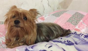 Imagen de Buscan a una mascota que desapareció tras un vuelco en la ruta a la altura de Dolores