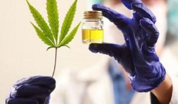 Imagen de Echarren envió un proyecto para regular el cultivo de cannabis en Castelli