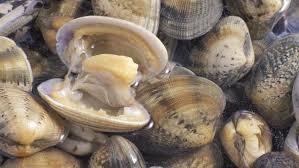 Imagen de Se estableció la veda total para extracción de moluscos en ciertos puntos de la costa bonaerense
