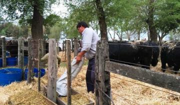 Imagen de Ya está en marcha la Expo Dolores en la Sociedad Rural