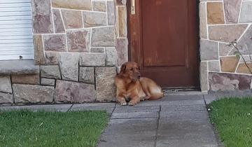 Imagen de Ya tiene familia: adoptaron al perro que había sido abandonado en Mar del Plata