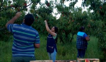 Imagen de Por un desperfecto eléctrico la Escuela Agraria de Dolores puede perder la cosecha