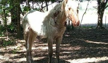 Imagen de Indignación por un supuesto caso de maltrato animal en Chascomús