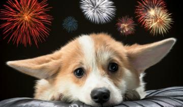 Imagen de Qué hacer para minimizar los efectos de la pirotecnia en nuestros perros