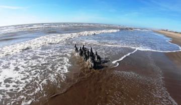 """Imagen de Fin de la """"cuarentena"""" para 10 pingüinos que pudieron regresar al mar"""