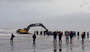 Imagen de Una ballena está varada en la costa de Mar del Tuyú