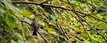 Imagen de Hoy podes disfrutar de un avistaje de la naturaleza en General Lavalle