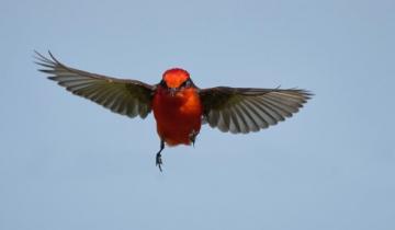 Imagen de Liberaron a más de 600 pájaros rescatados del tráfico ilegal