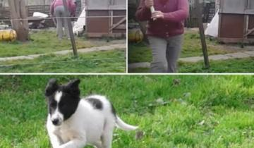 Imagen de Maltrato animal: denunciaron a una vecina madariaguense por golpear violentamente a su mascota