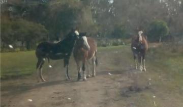 Imagen de Secuestran caballos que estaban sueltos en la Ruta 74
