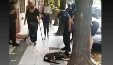 Imagen de Mar del Plata: vecinos denuncian que mataron un perro arrojándolo desde un tercer piso