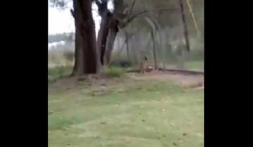 Imagen de Alerta: buscan a un puma suelto en Brandsen que fue visto por varios vecinos