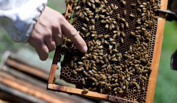 Imagen de Murieron miles de abejas en Ayacucho tras ser fumigadas con agroquímicos