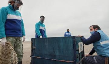Imagen de Liberaron tres lobos marinos tras ser rescatados en estado de desnutrición y deshidratación