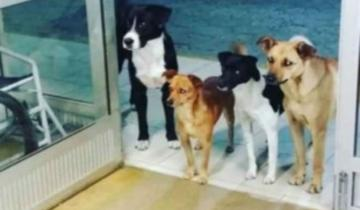 Imagen de Cuatro perros esperaron en la puerta de un hospital a que su dueño fuera atendido