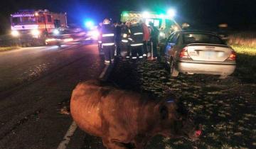 Imagen de Cuatro heridos de consideración al impactar una vaca en la Ruta 11