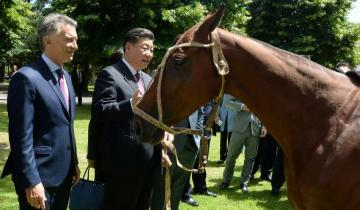 Imagen de Macri le regaló un caballo de polo al Presidente Chino