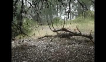 Imagen de Una fuerte tormenta ocasionó varios trastornos en Villa Gesell