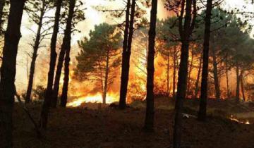 Imagen de Condenado por incendiar el bosque de Cariló