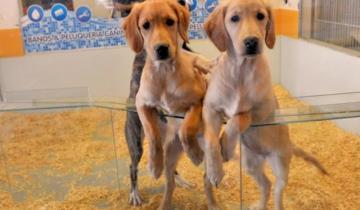 Imagen de Prohíben la exhibición de mascotas en vidrieras de Mar del Plata