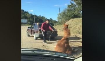 Imagen de Arrastró un caballo con su auto hasta que el animal se desplomó