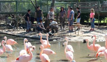 Imagen de La Defensoría del Pueblo exigió la reconversión del zoológico de Luján