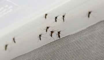 Imagen de Continúa la invasión de mosquitos en la Costa Atlántica: por qué los especialistas afirman que no hay que fumigar