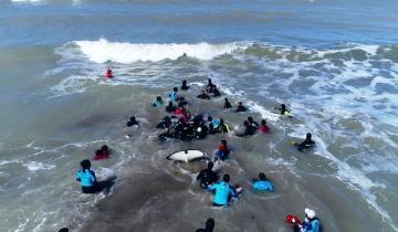 Imagen de Video: así rescataron a la última de las 7 orcas varadas en Mar Chiquita
